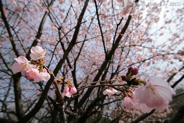 IMG_070309_03.jpg