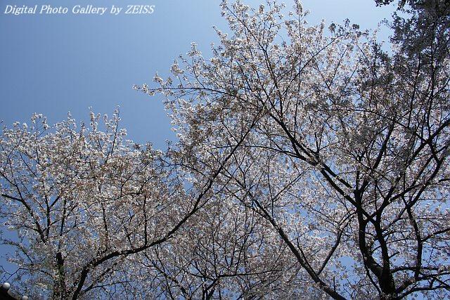 PICT060407_04.jpg