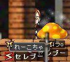 Maple0486q.jpg