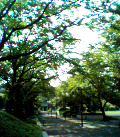 060803_nakaniwa.jpg