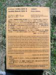 nao-gomi-3.jpg