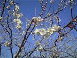 きれいですね~春も近しですね~~