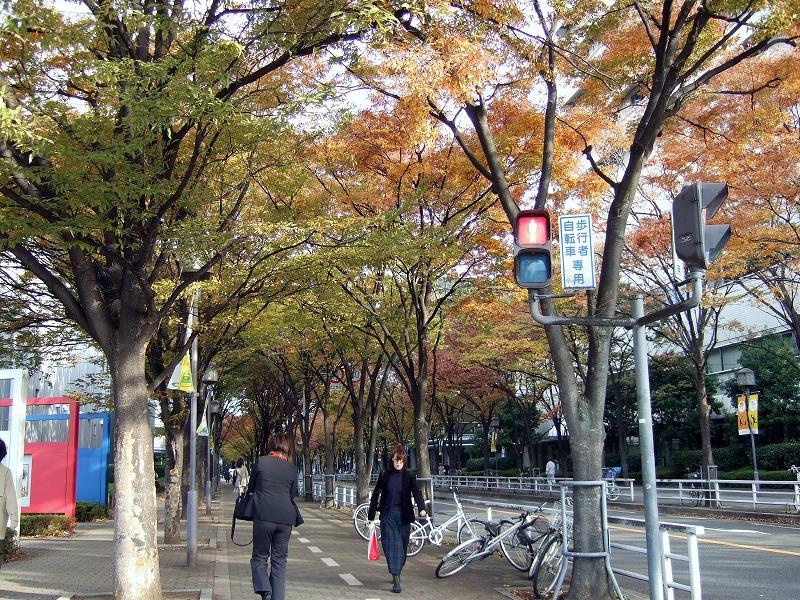 ○ けっこう綺麗な通勤路