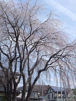 2009_0329_散歩0018