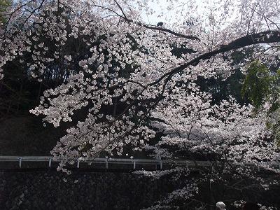 2009_0404_散歩0005