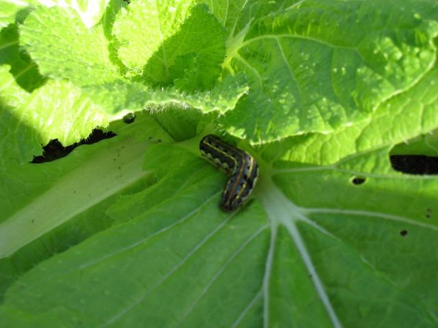 えびす農園のブログ