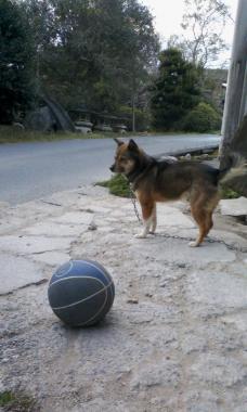 ボールとくま