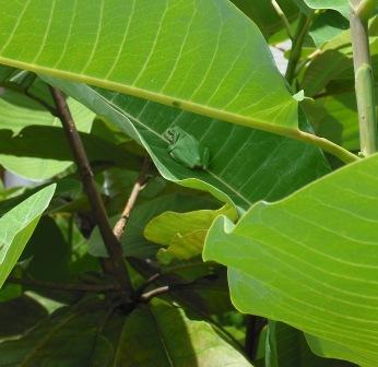 木の上にカエル