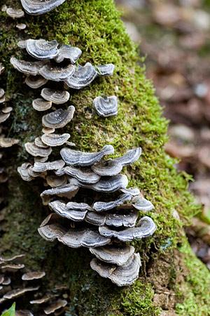 森林公園秋1-15