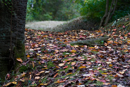 森林公園秋2-3