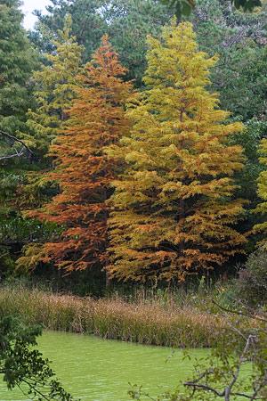 森林公園秋2-4