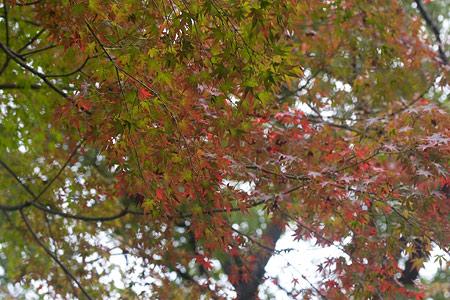 森林公園秋2-5