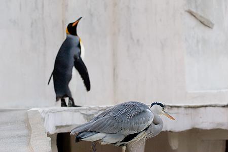 ペンギンストーリー10