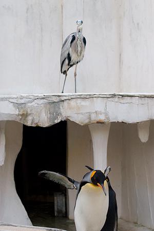 ペンギンストーリー5