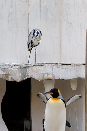 ペンギンストーリー6