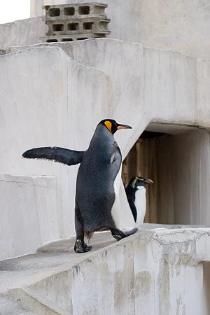 ペンギンストーリー8