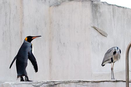 ペンギンストーリー9