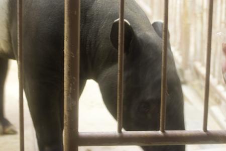 動物園の基本-11