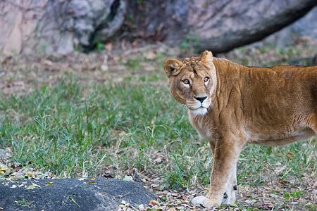 動物園の基本-4