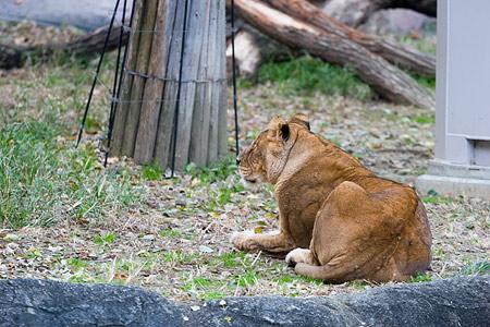 動物園の基本-5