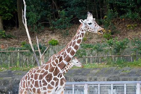 動物園の基本-7