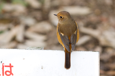 小ネタ鳥写真-1