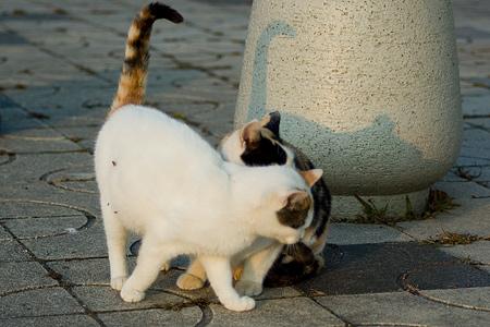 落合公園の猫-3