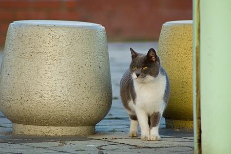 落合公園の猫-4