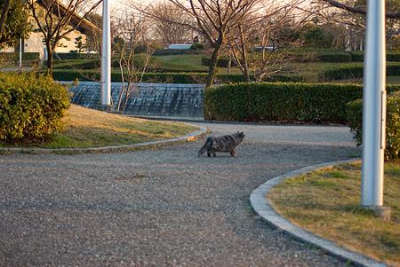 落合公園の猫-5
