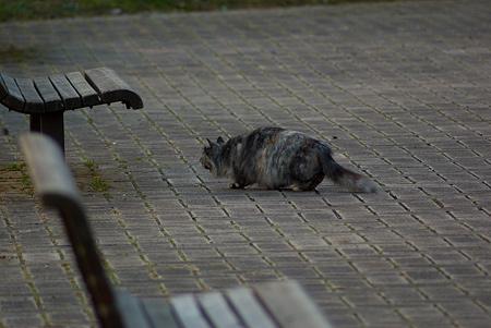 落合公園の猫-6