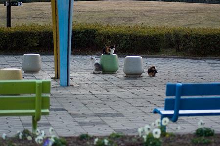 落合公園の猫-9