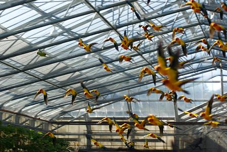 冬の花鳥園3-1