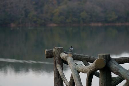 小幡緑地鳥編-8