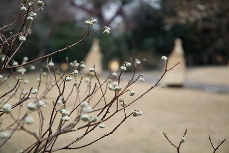 徳川園花編-11