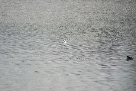 雨池鳥撮り-1
