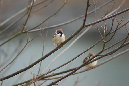雨池鳥撮り-10