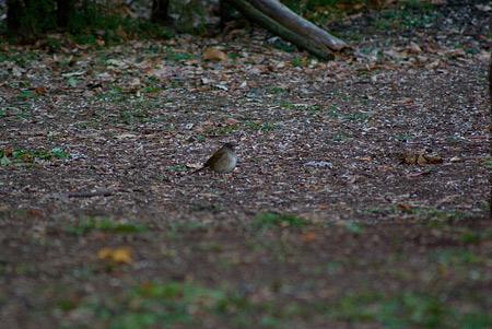 雨池鳥撮り-11