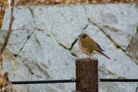 雨池鳥撮り-12