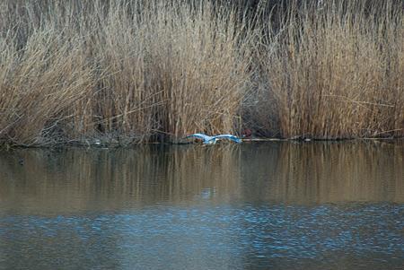 雨池鳥撮り-4