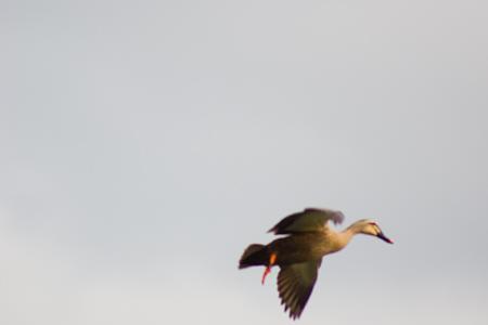 雨池鳥撮り-5