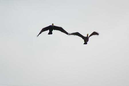 雨池鳥撮り-6