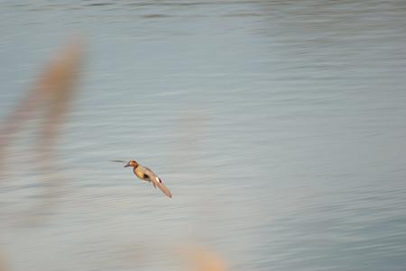 雨池鳥撮り-7