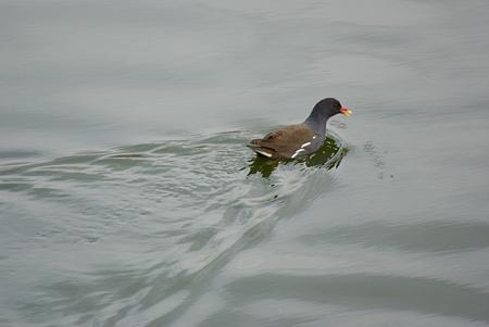 雨池鳥撮り-8