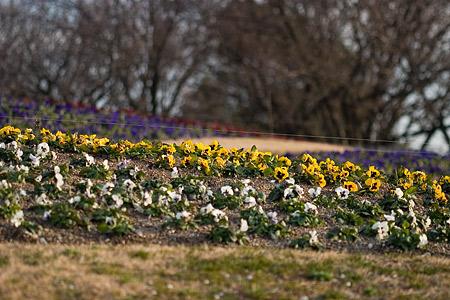 東山植物園2-12
