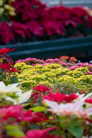 東山植物園2-3