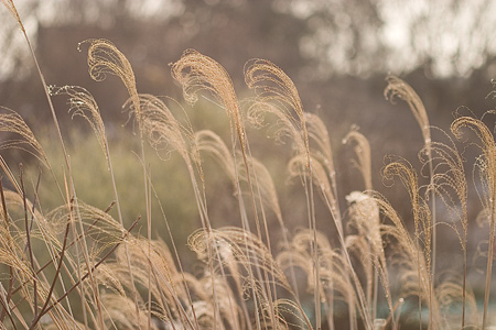 東山植物園冬-2