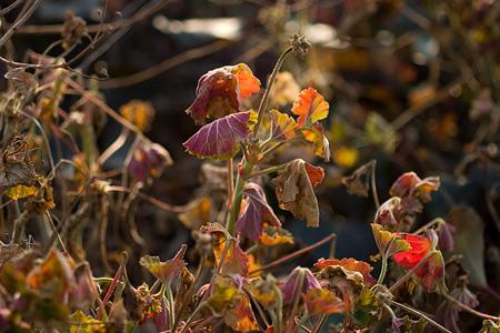 東山植物園冬-4