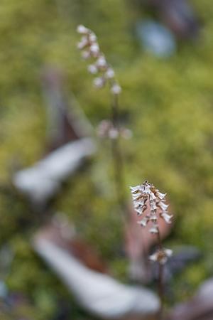 東山植物園冬-5
