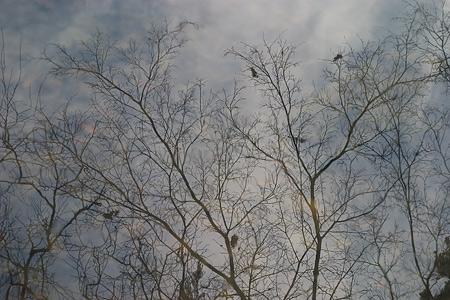 東山植物園冬-6