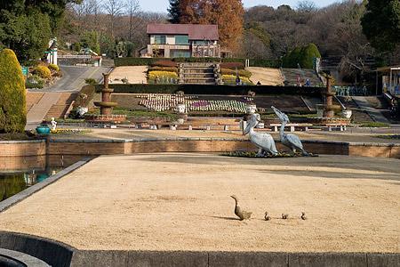 東山植物園冬-7